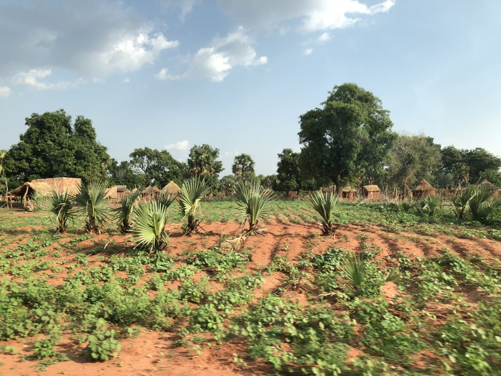 Crops close to a village currently hosting refugees from the Central African Republic in the Logone Oriental ©REACH/2018