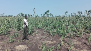 South Sudan: Enhancing Peaceful Co-existence and Resilience in Maban County